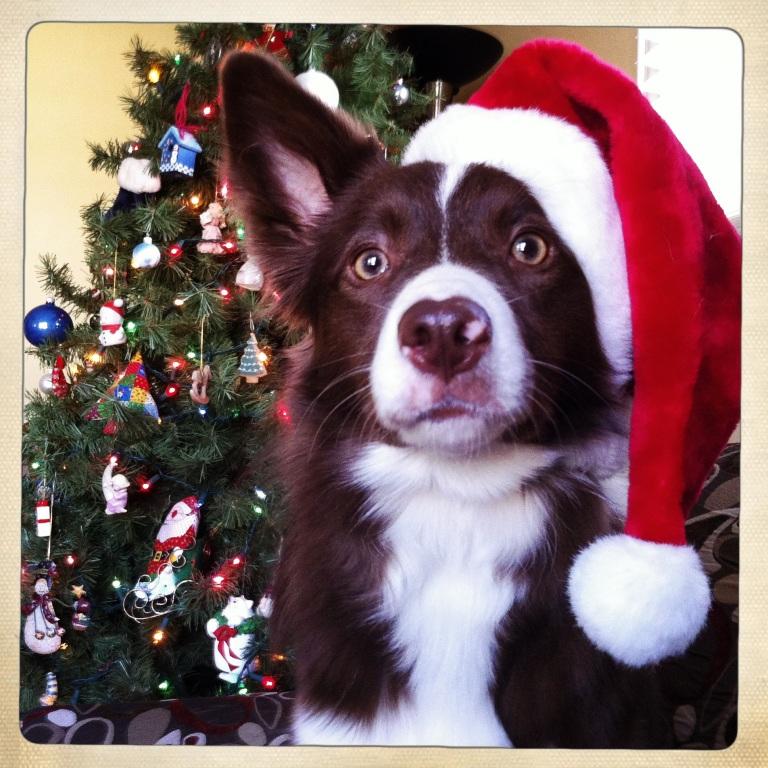 Phenom Santa